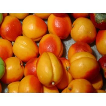 Meyve Sabunu Kayısı
